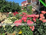 Цветы на территории - Мини-отель Валента - Курортное